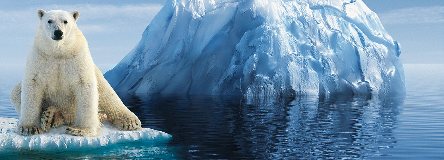 Iceberg_Ours-Polaire_HD
