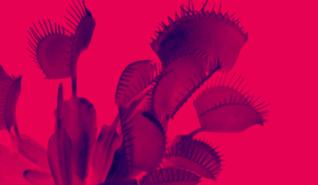 Image rouge et bleu avec une plante